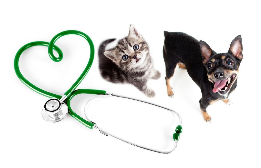 Прием ветеринара в Запорожье