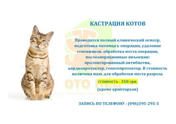 Кастрация кота 350 грн. Акция-всё включено!